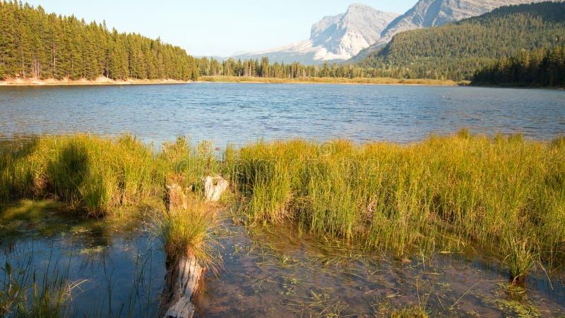 Gräs- kust av Fishercap sjön i glaciärnationalpark i Montana USA royaltyfria foton