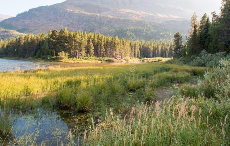 Gräs- kust av Fishercap sjön i glaciärnationalpark i Montana USA fotografering för bildbyråer