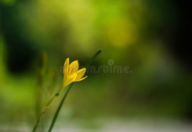 Gräs Lilly royaltyfria foton