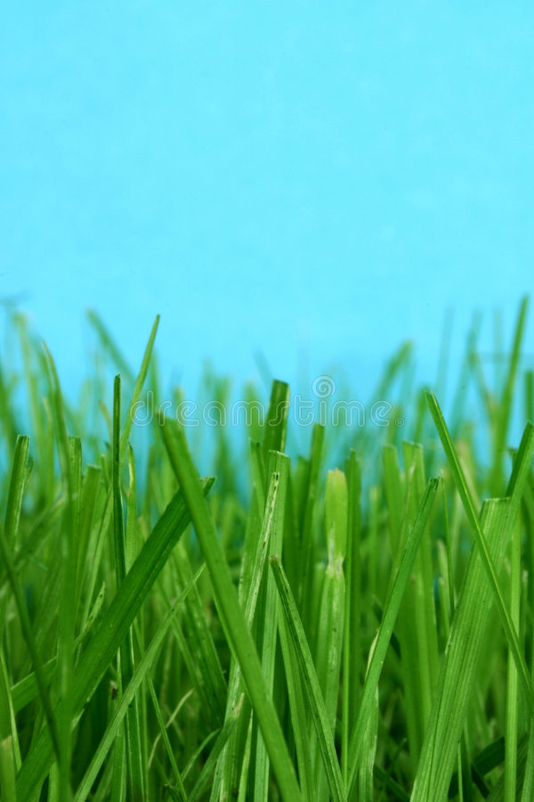 gräs makroen arkivbilder