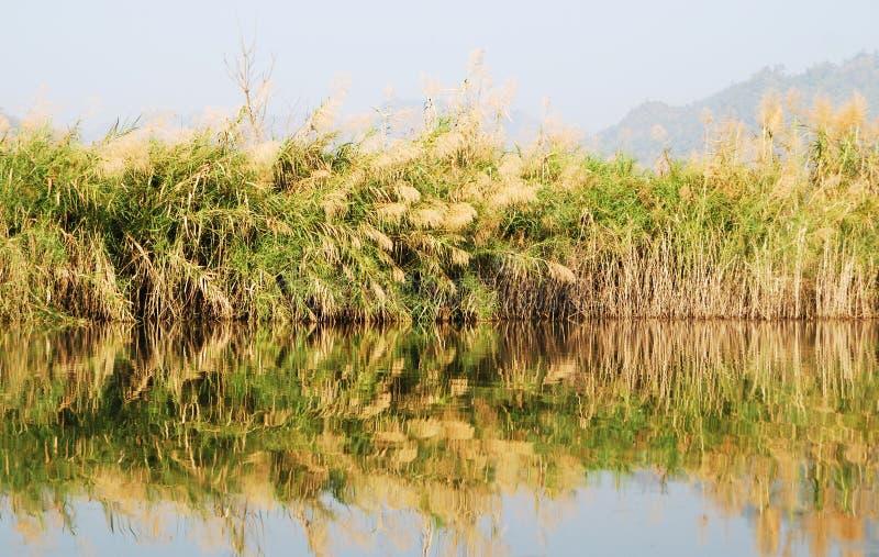 Download Gräs- marsklan arkivfoto. Bild av fält, utomhus, pöl - 37349054