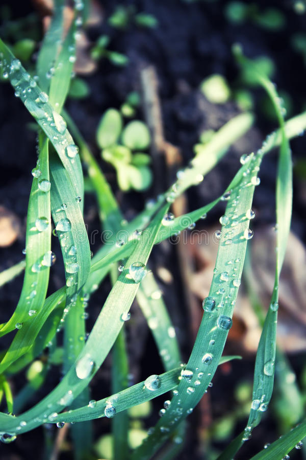 Gräs med dagg arkivbild