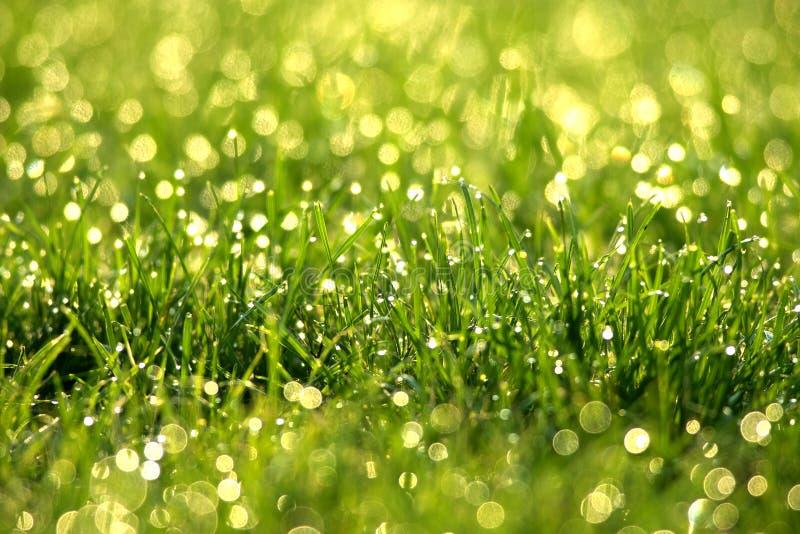 Gräs med dagg tappar royaltyfri bild