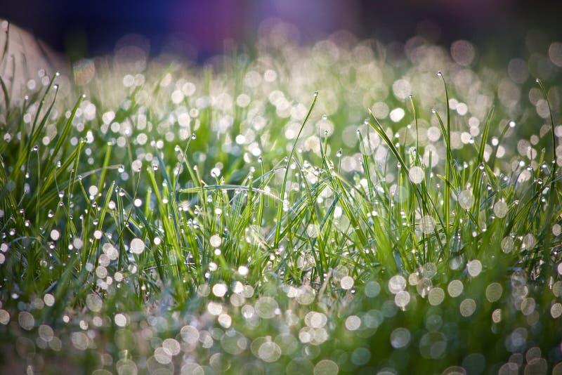 Gräs med regnar tappar arkivfoto
