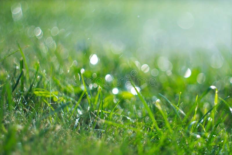 Gräs med regnar tappar Bevattna gräsmatta regn Suddig bakgrund för grönt gräs med vatten tappar closeupen Natur miljö arkivfoton