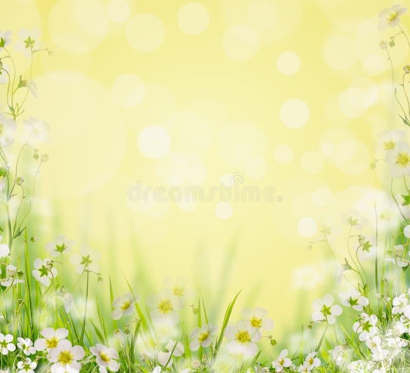 Gräs med vita blommor, suddig naturbakgrund, arkivbild