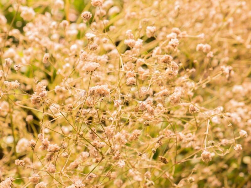 Gräs naturen i den moring ljusa selektiva fokusen arkivbild