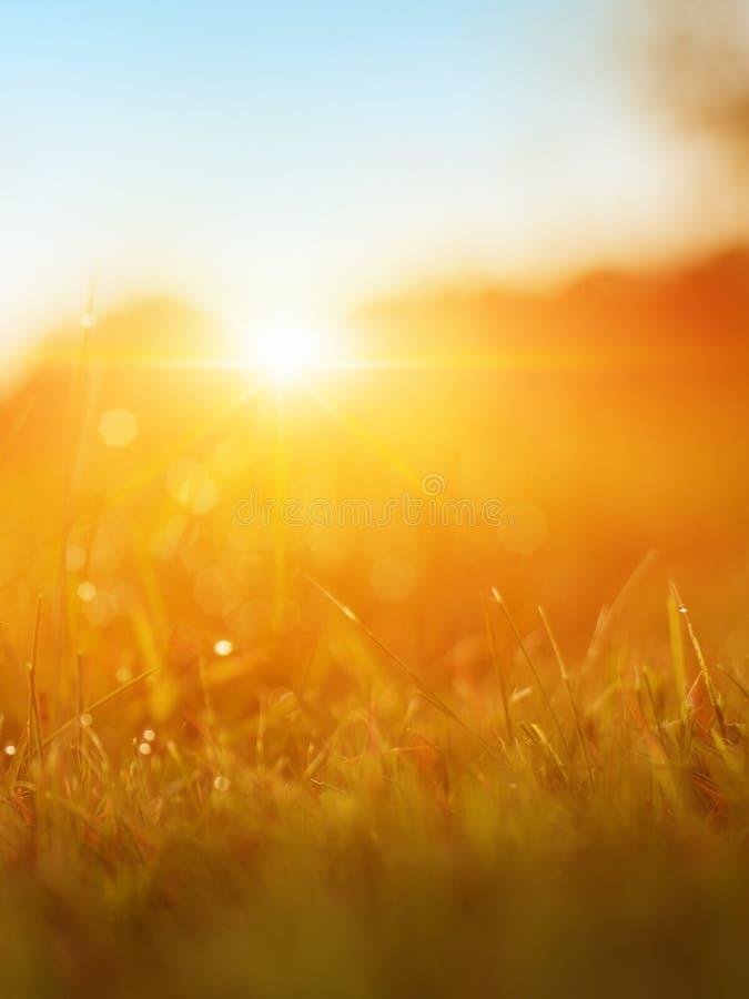 Gräs Nytt grönt vårgräs med closeupen för daggdroppar sun slapp fokus abstrakt bakgrundsnatur E fotografering för bildbyråer