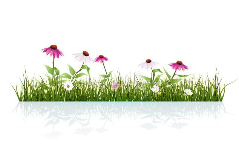 Gräs och echinacea för vektorillustration grönt, purpurfärgad coneflower och sidor med droppdagg och skugga på jordning stock illustrationer