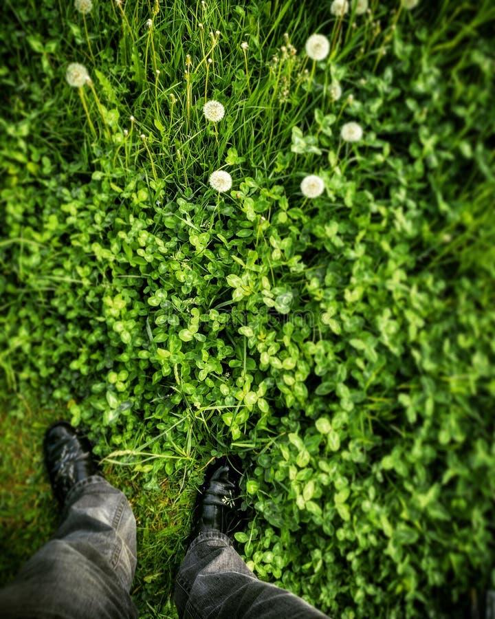 Gräs och kängor arkivbild