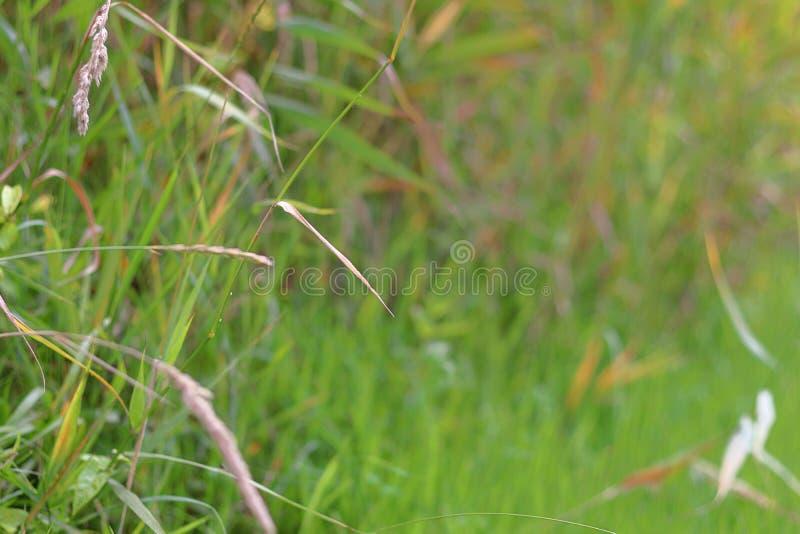 Gräs och oskarp bakgrund arkivbilder