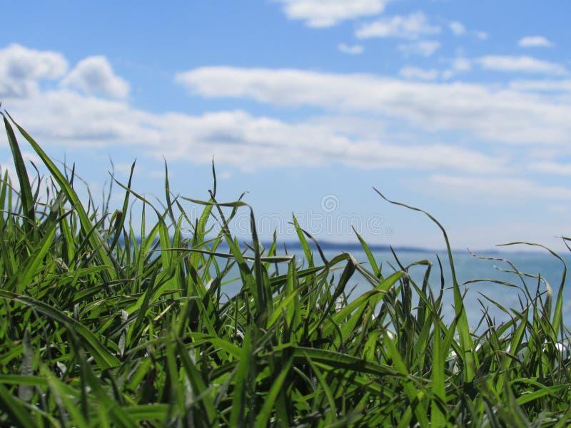 Gräs och sky arkivbilder