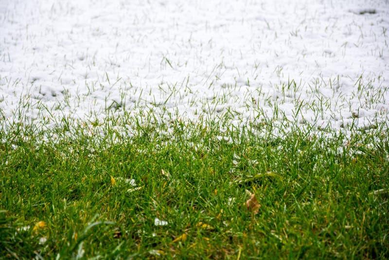 Gräs och snow arkivfoton