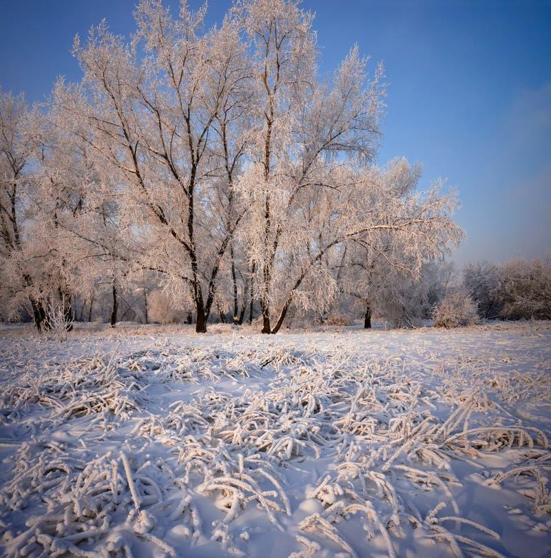Gräs och träd som täckas med frost och snö royaltyfri bild