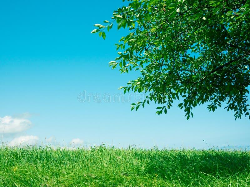 Gräs- och trädnaturbakgrund arkivbilder