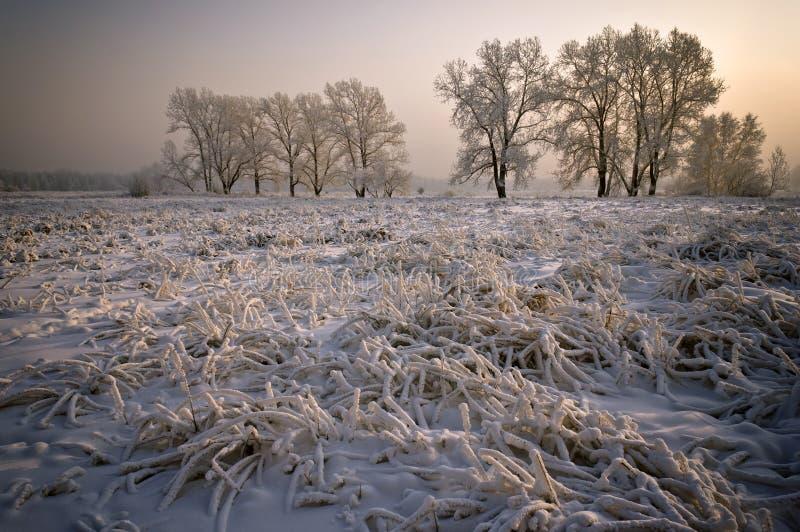 Gräs och trees som täckas med ett tjockt lagrar av snow fotografering för bildbyråer