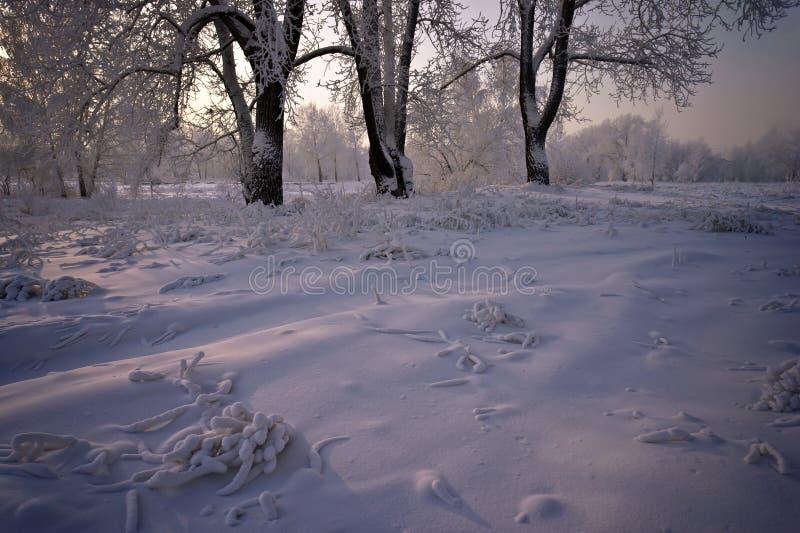 Gräs och trees som täckas med snow arkivbild