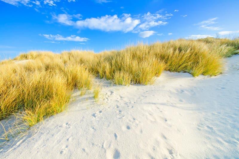 Gräs på dyner för en vitsand sätter på land och slösar skyen arkivfoto