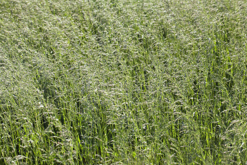 Gräs på en äng arkivfoton