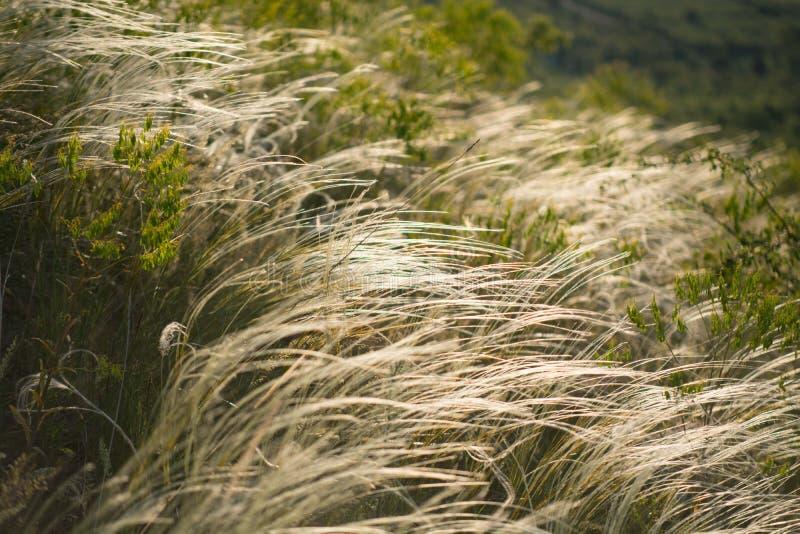 Gräs på kullen arkivfoton