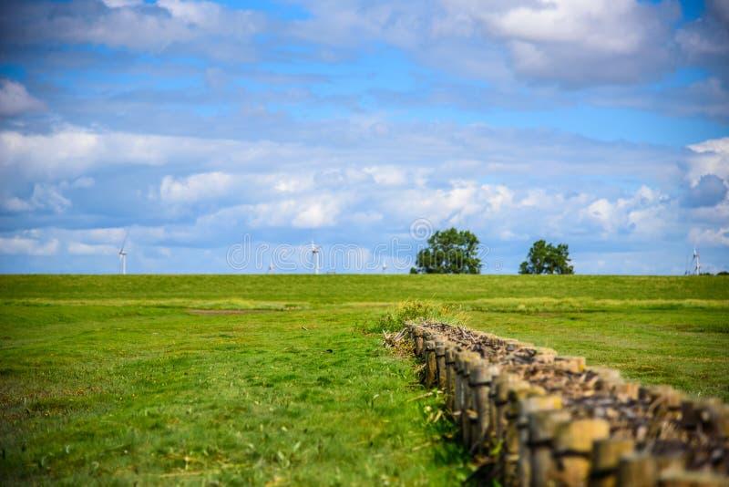 Gräs på träsk arkivbilder
