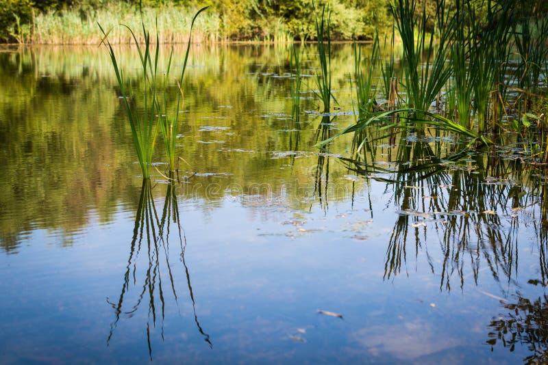 Gräs på vattnet royaltyfri fotografi