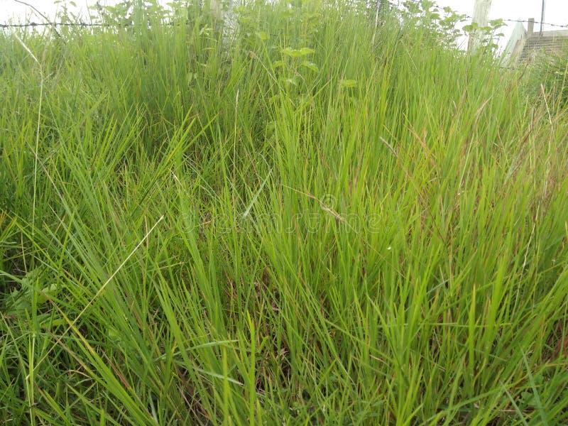 Gräs & rotar i den Nesa fördämningen som ser så härlig it& x27; s tilldrar för besökare royaltyfri bild