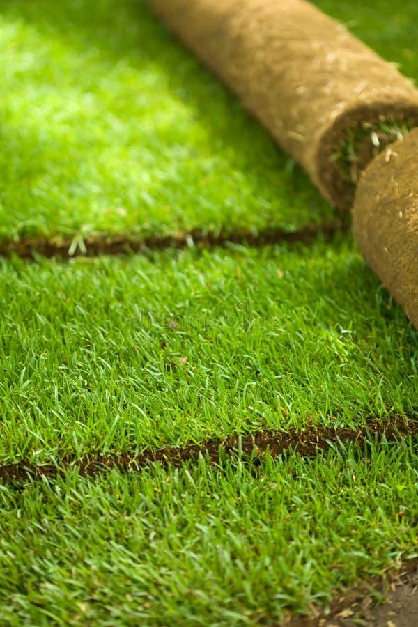 gräs rullar delvist unrolled torva arkivfoto