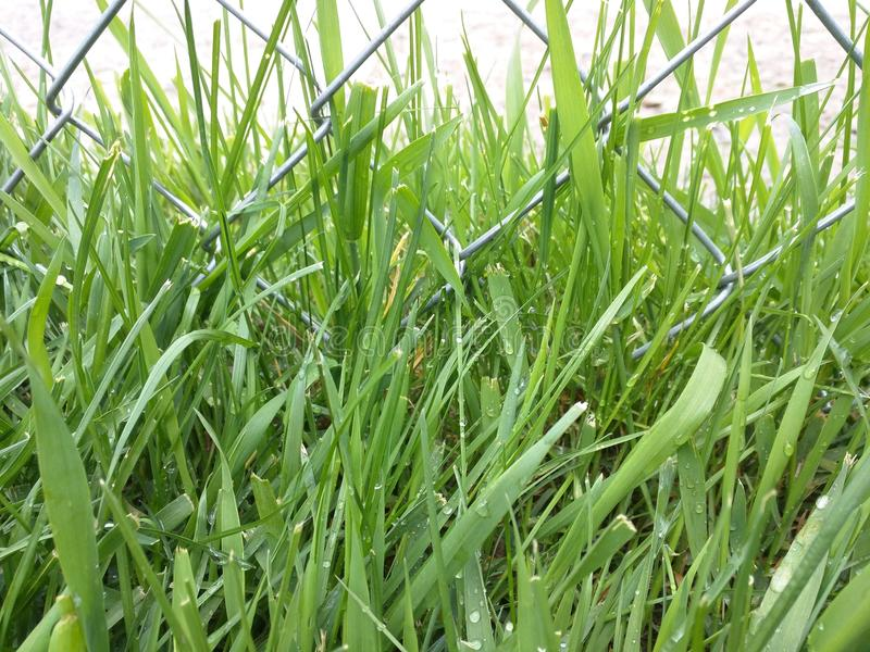 Gräs runt om staketet royaltyfri bild