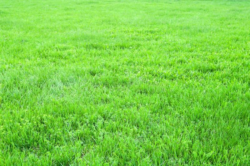 Gräs sätter in fotografering för bildbyråer