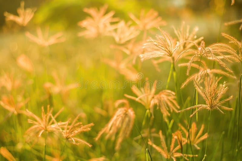 Gräs skönhetarbete i aftonen arkivbild