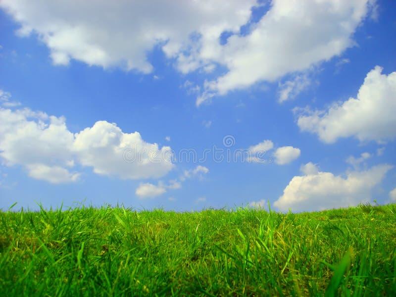 gräs skyen fotografering för bildbyråer