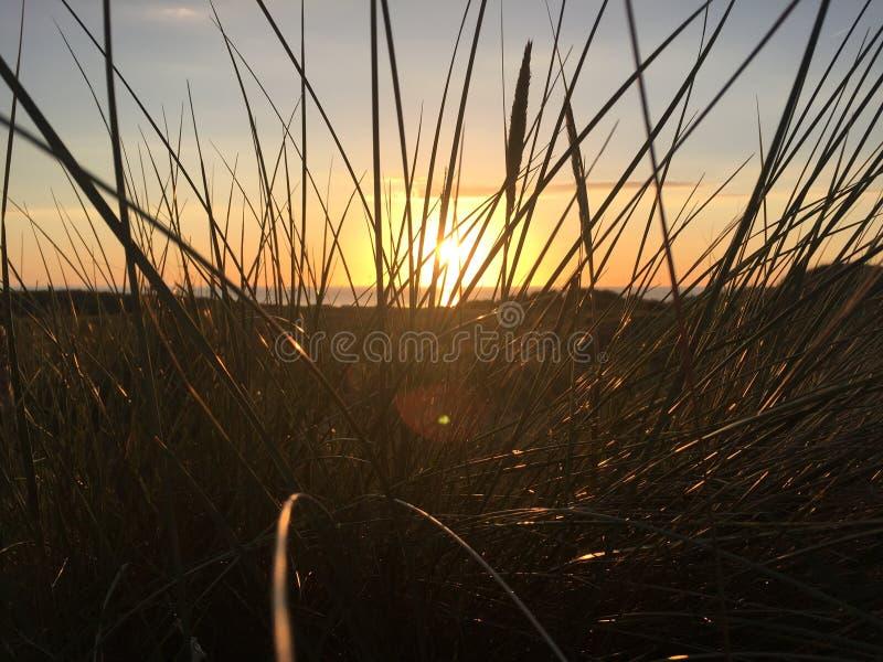 gräs- solnedgång royaltyfri fotografi
