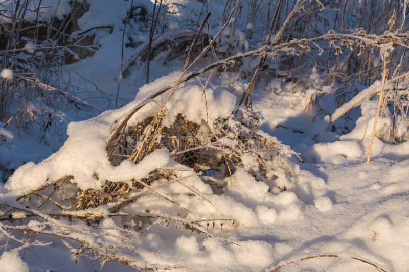 Gräs som täckas med snö och frost royaltyfri fotografi