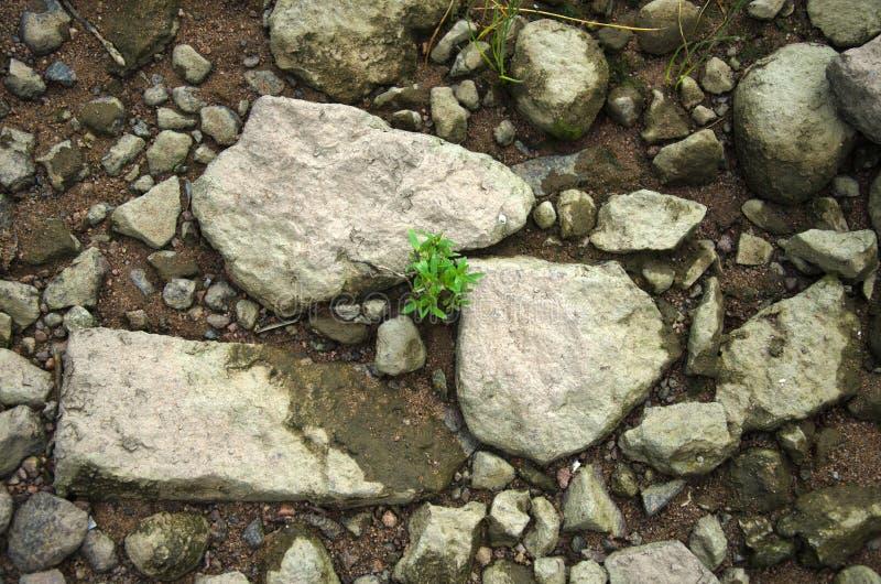 Gräs som växer mellan stenar royaltyfri bild