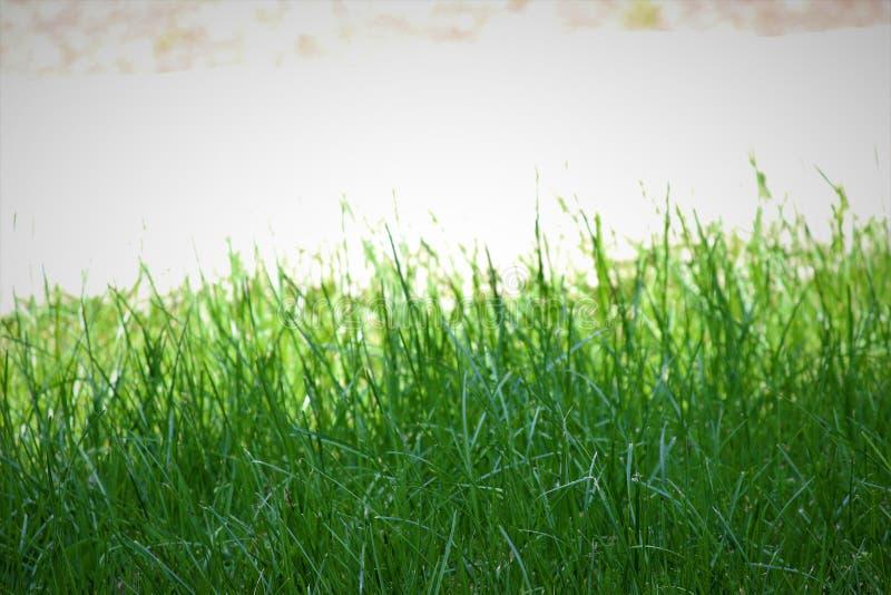 Gräs utöver ljuset arkivfoto