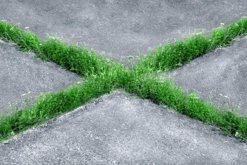 Gräs växer till och med asfaltkanfasen i form av ett kors arkivfoton