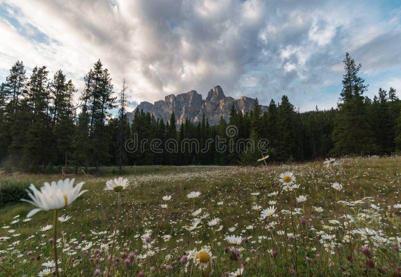 Gräs- vårfält som ser in mot slottföreningspunkt royaltyfria bilder