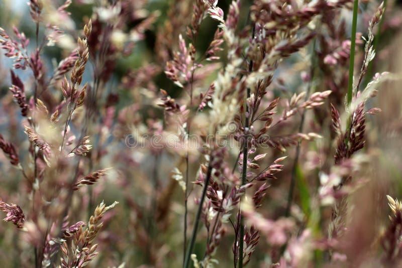gräs wild royaltyfri bild