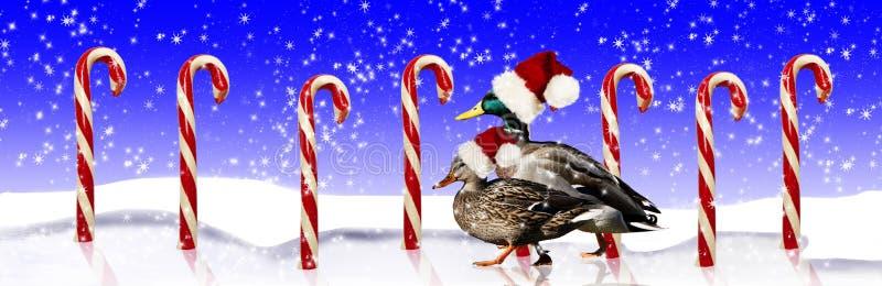 Gräsandet duckar Santa Hats royaltyfri foto