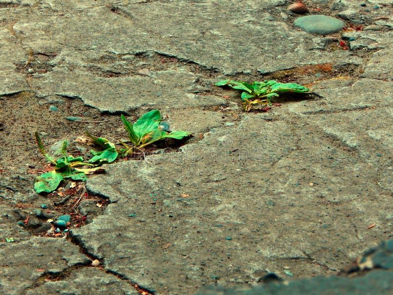 Gräsavbrotten till och med asfalten arkivfoto