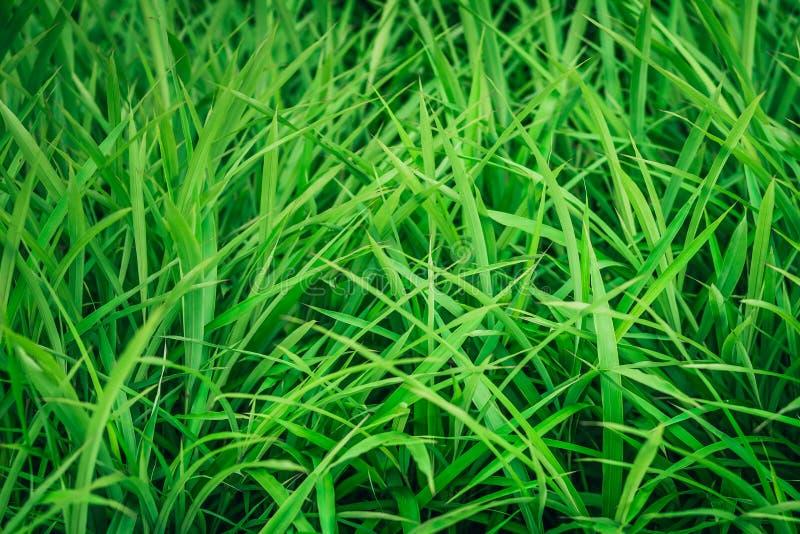 Gräsbakgrundstexturen royaltyfri bild
