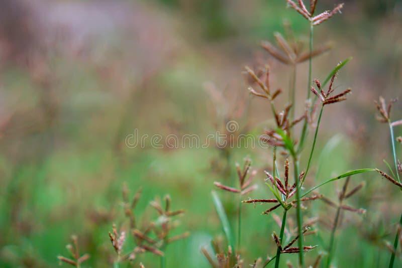 Gräsblomma i ängen royaltyfri bild