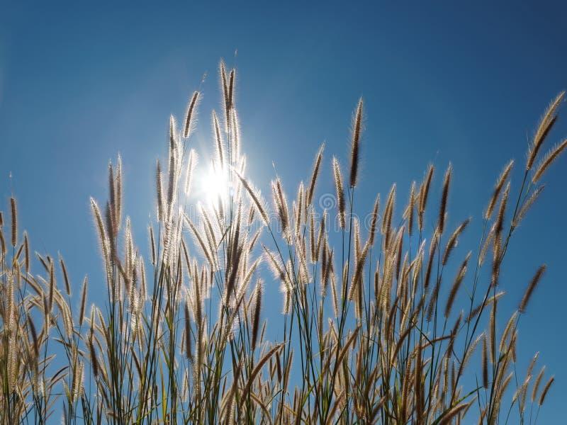 Gräsblomma under blå himmel royaltyfria bilder