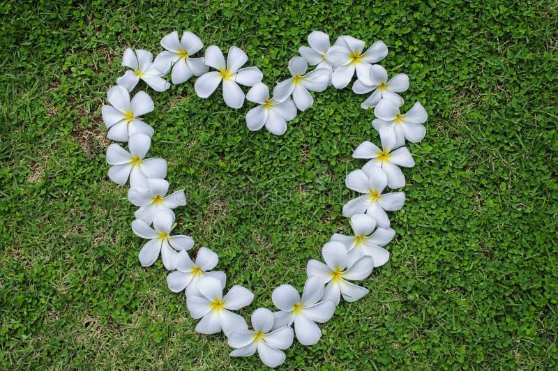 Gräsblommahjärta. arkivbilder
