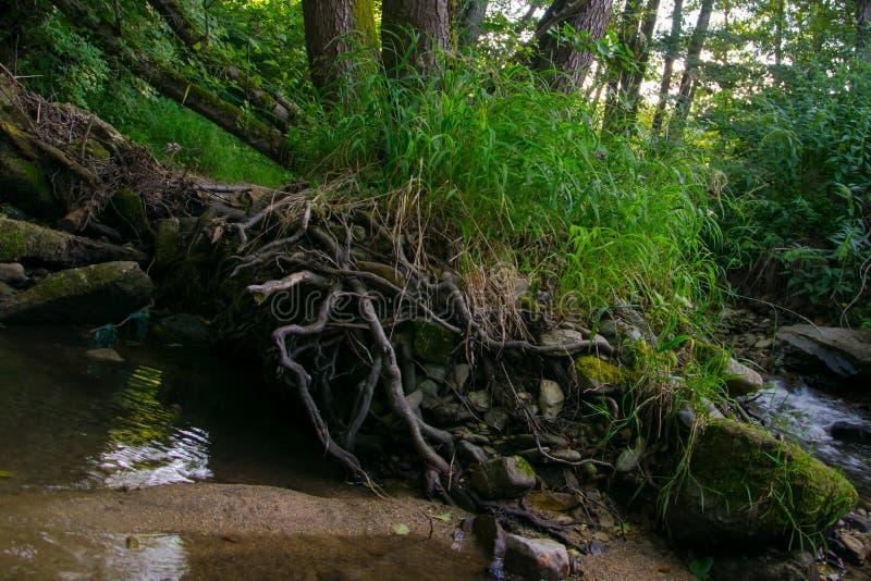 Gräsbuske på skogen royaltyfri fotografi