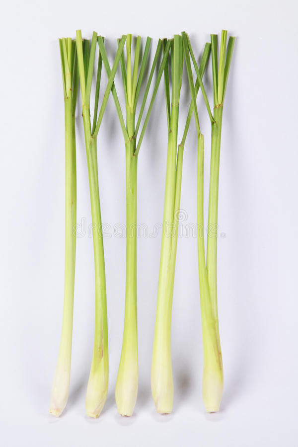 gräscitron royaltyfri bild