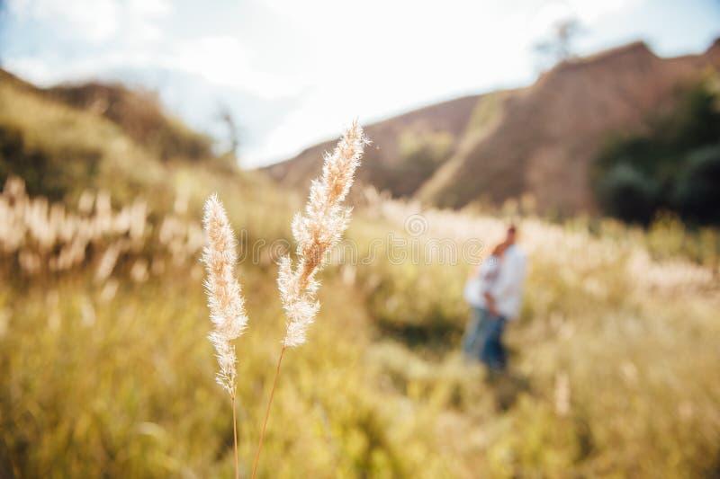Gräsdimma och morgonsolljuset fotografering för bildbyråer