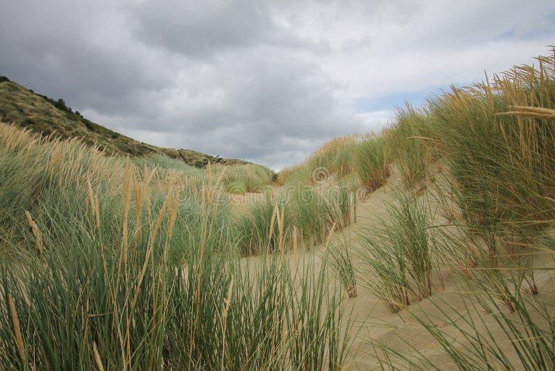 Gräsdyn på en molnig dag skapar en bakgrunds- och tapetsikt royaltyfria foton