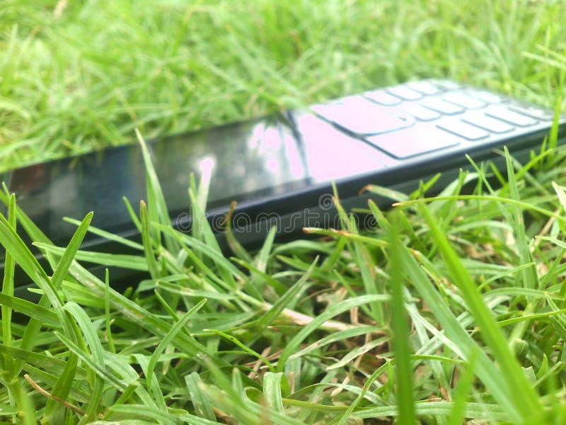 gräser stockfoto